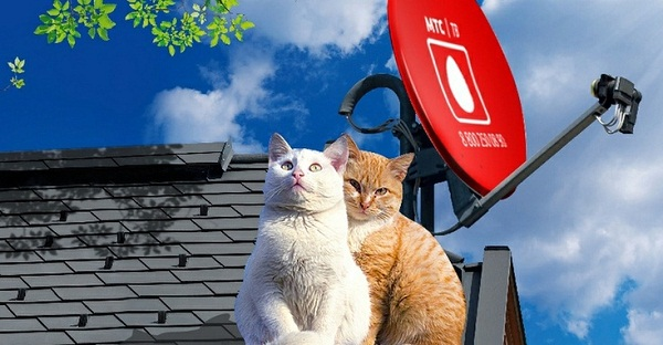 коты возле антенны